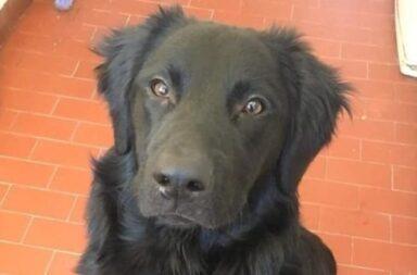 Jimmy, el perro abandonado por la crisis