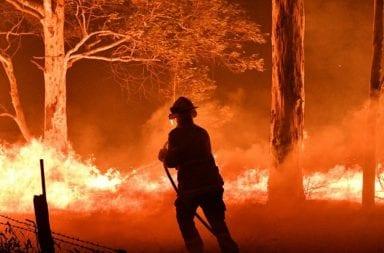 Impactantes números de los incendios en Australia: 24 personas y 400 millones de animales murieron