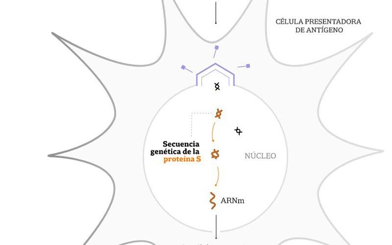 Coronavirus: Johnson & Johnson arranca la última fase de su vacuna de dosis única y se probará en la Argentina