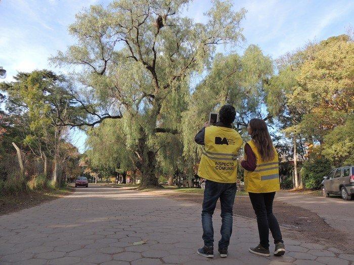 La Ciudad de Buenos Aires deberá sumar 100 mil árboles por año