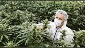 Cannabis medicinal: Jujuy inaugura el primer laboratorio en el país