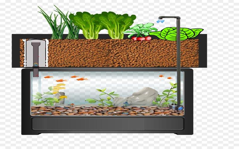 Los sorprendentes beneficios de un jardín en casa con el sistema orgánico de Acuaponia