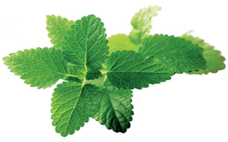 Tratar las migrañas con una infusión herbal