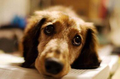 Importante movimiento para denunciar a una vecina de Belgrano que envenena animales